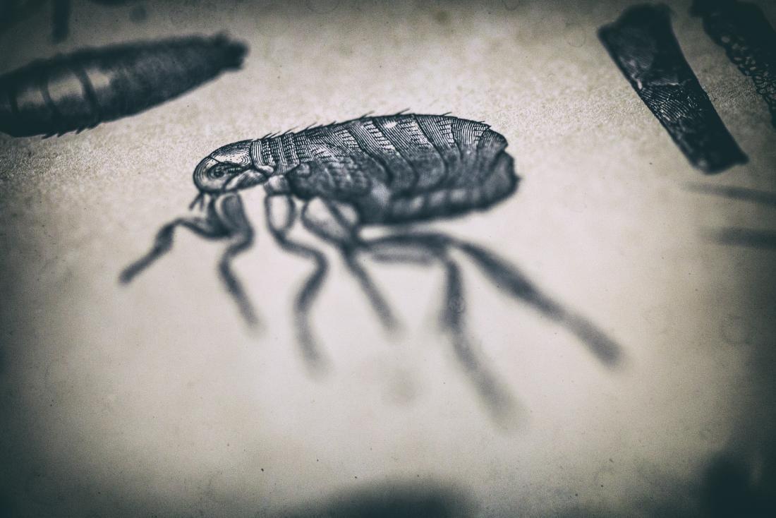 Заболевание бубонной чумой обнаружено на севере Китая