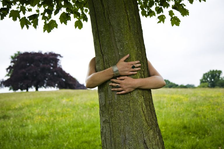 Обнимая дерево картинки