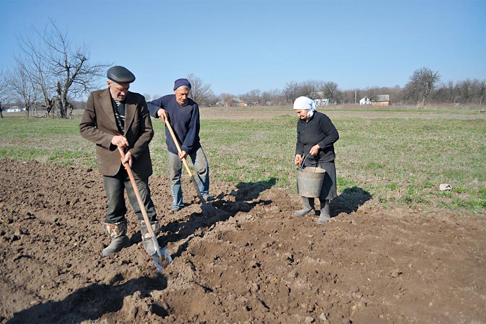 земля, крестьяне, посадка картофеля, фотография, село