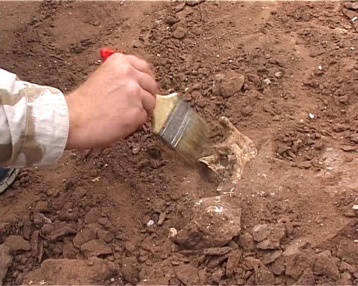 В Перу нашли массовое захоронение 140 детей и более 200 лам