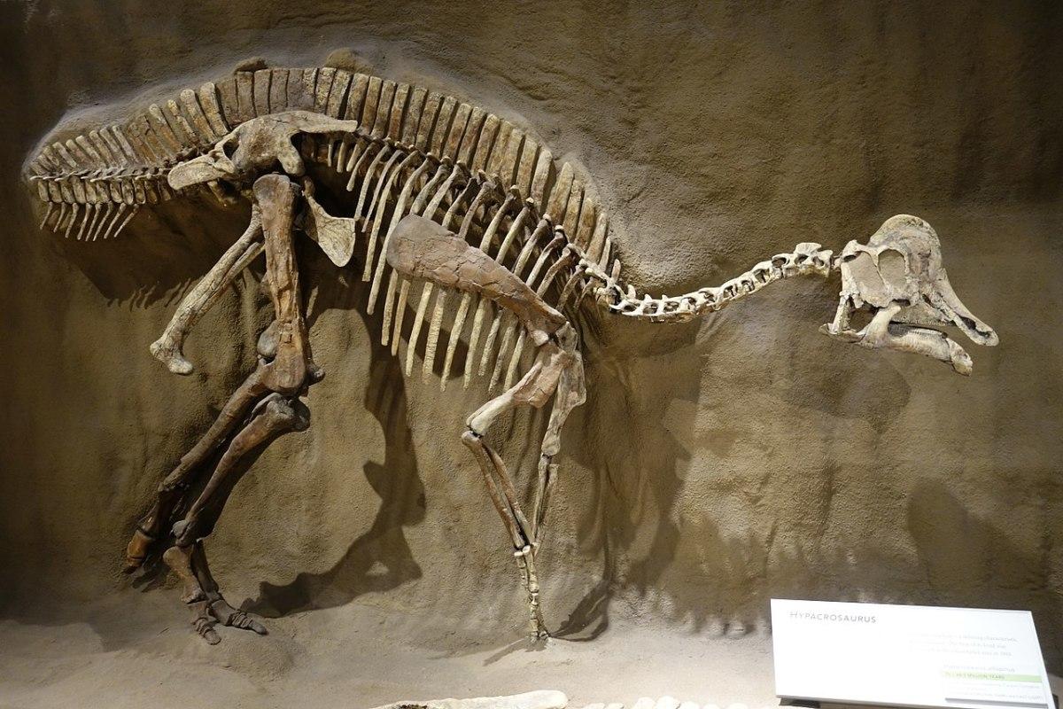 Как в Парке Юрского периода. Найдено ДНК динозавров в окаменелостях возр...