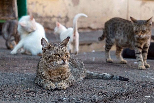 коронавирус кошек фото