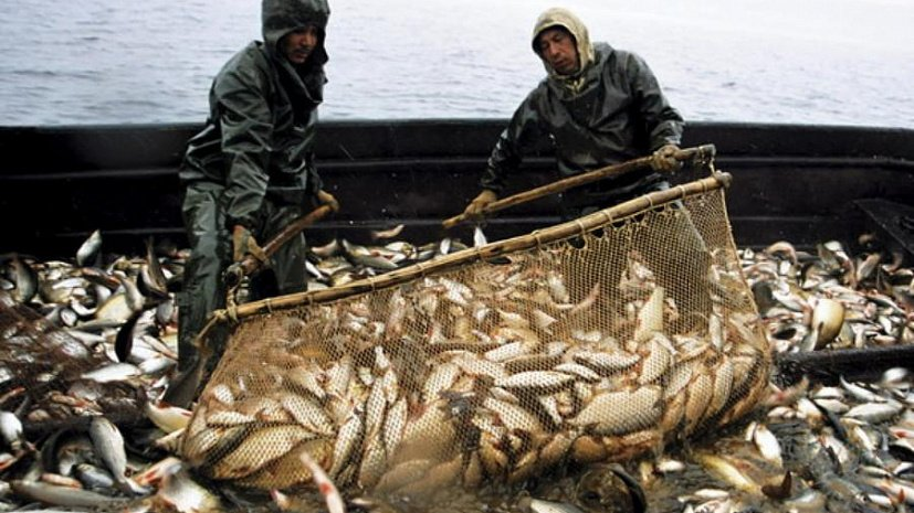Украина и РФ согласовали квоты на ловлю рыбы в Азовском море