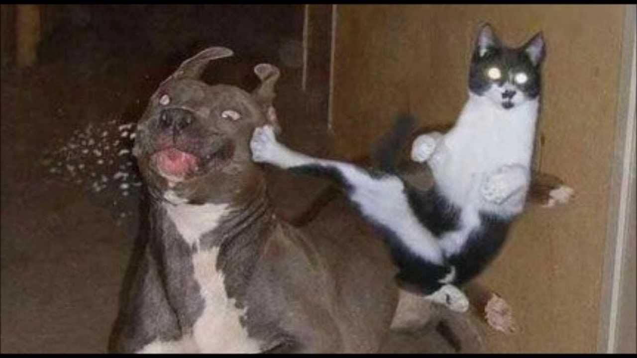 Как кошка с собакой. Ученые нашли способ примирить четырехлапых врагов
