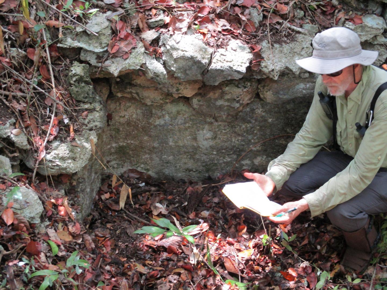 В мексиканских болотах обнаружили древние поля майя
