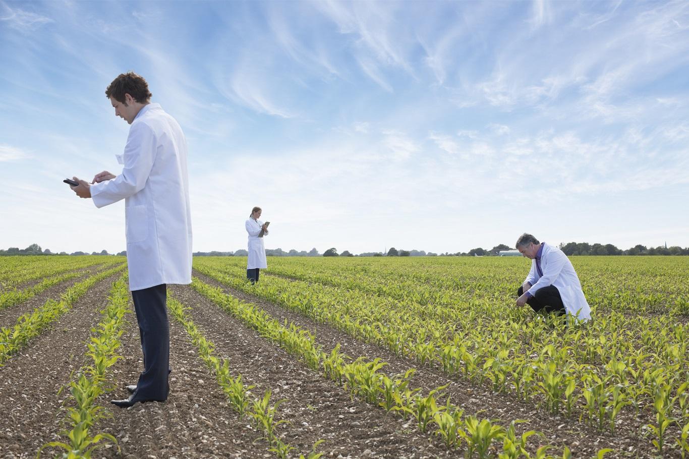 Наперегонки с голодом. Как ученые собираются прокормить растущее населен...