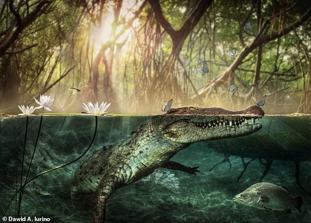 Большое путешествие: ученые выяснили, как крокодилы попали в Америку 11...
