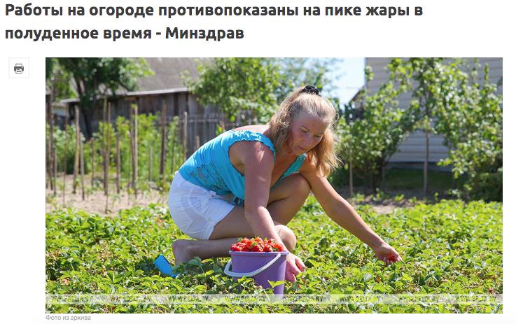 Как не перегреться... на огороде. О чем пишут белорусские госСМИ во врем...