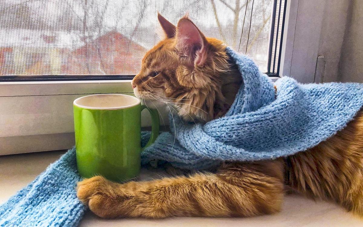 Бодрые лапы. Пять способов сохранить здоровье кота в квартире