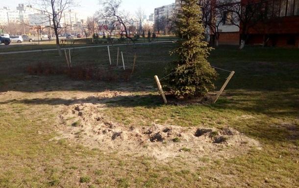 В киевском сквере украли сотни кустов барбариса и можжевельника