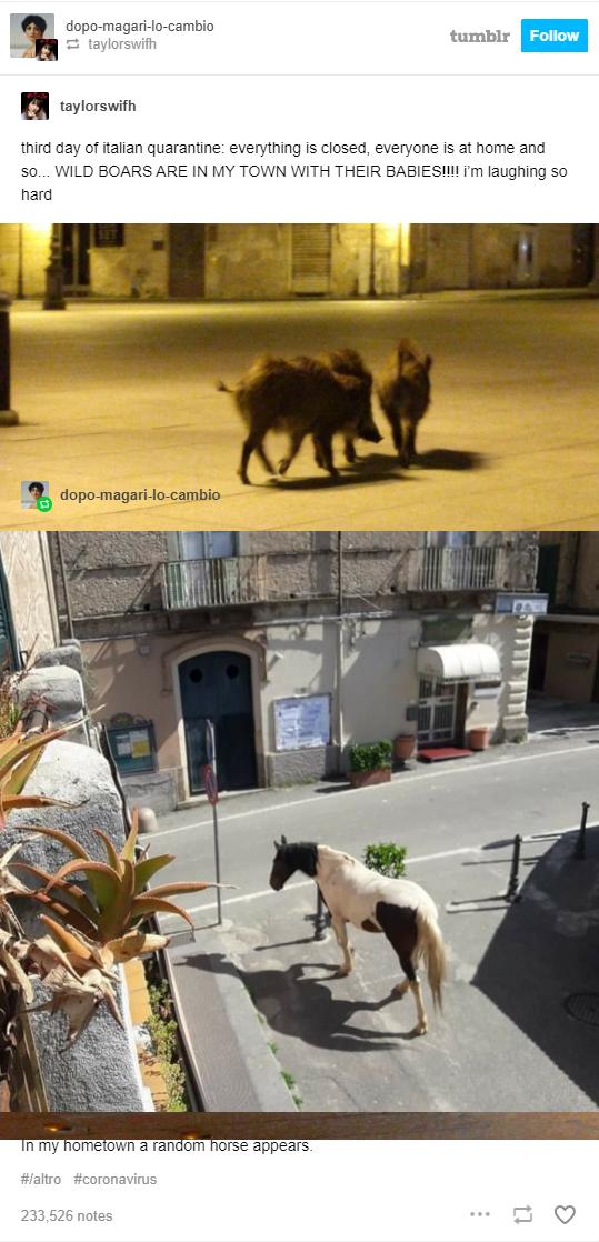 Италия, пандемия коронавируса, животные