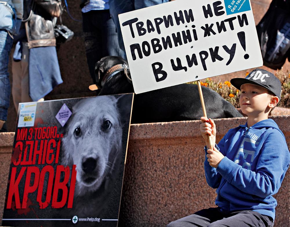 активисты, зоозащитники, акция, фото, собака