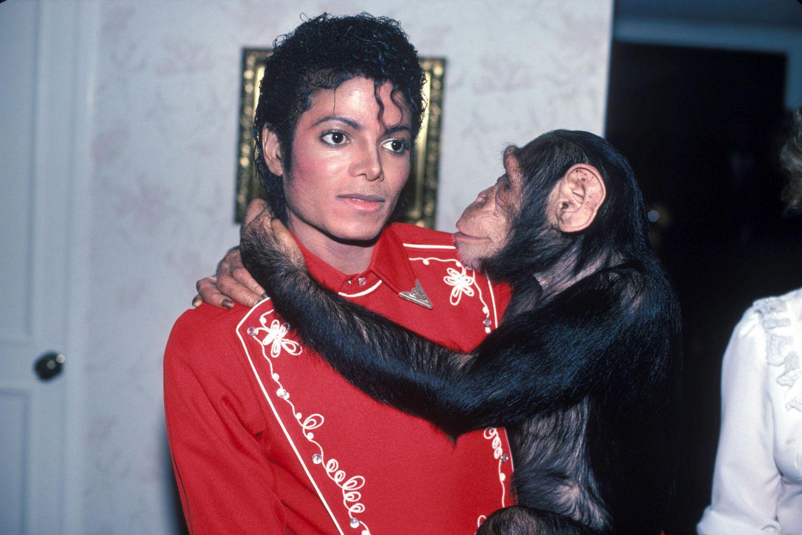 На покое, рисуя картины: где шимпанзе Майкла Джексона и орангутанг-киноз...