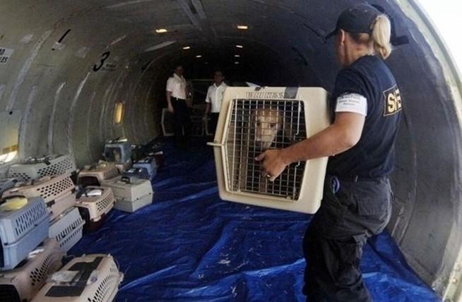 МАУ отстранила своего топ-менеджера из-за гибели 38 щенков на рейсе Киев...