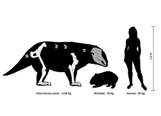 Древние родственники вомбатов и коал весили больше тонны
