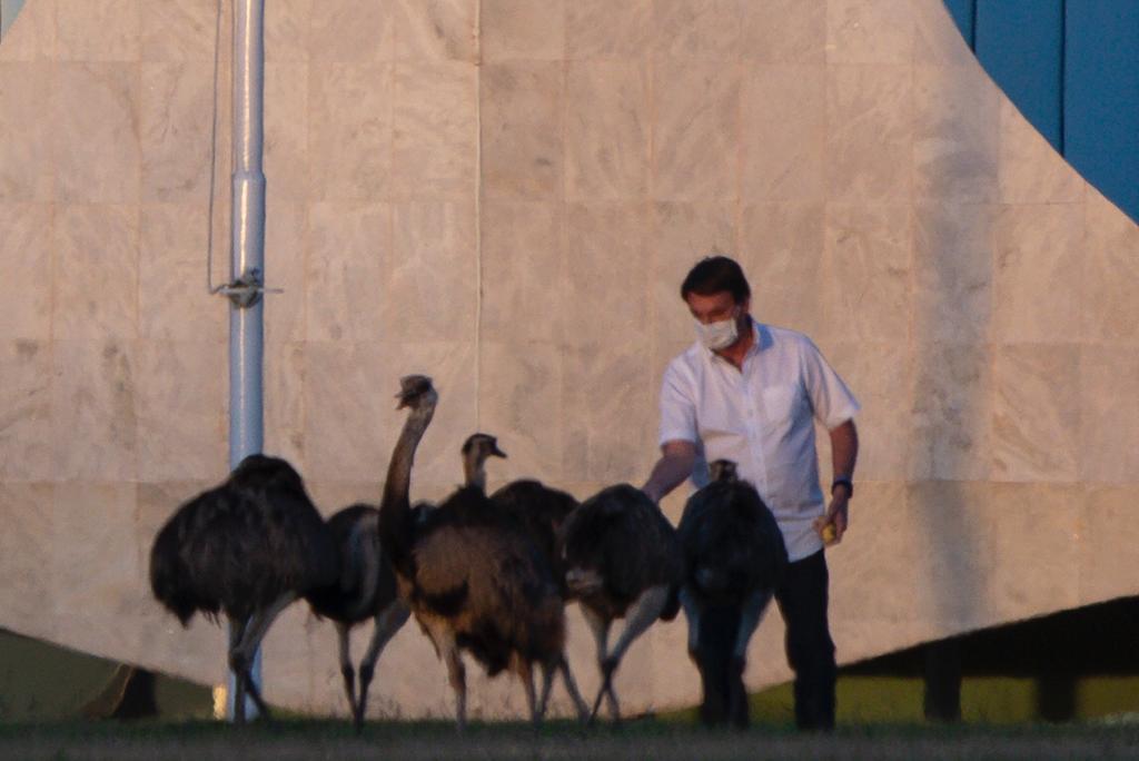 Болсонару на карантине клюнула птица: бразильцы шутят, что она олицетвор...