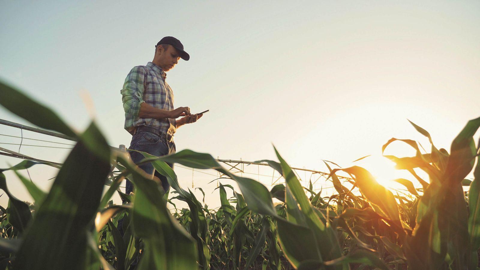 От партнерских программ до векселей. Как кредитуют украинских аграриев и...