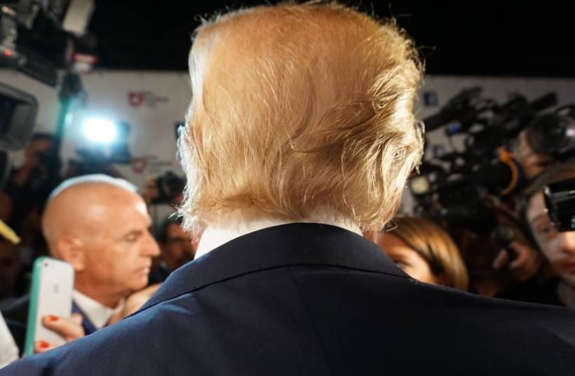 Ученый назвал новый вид моли в честь прически Трампа