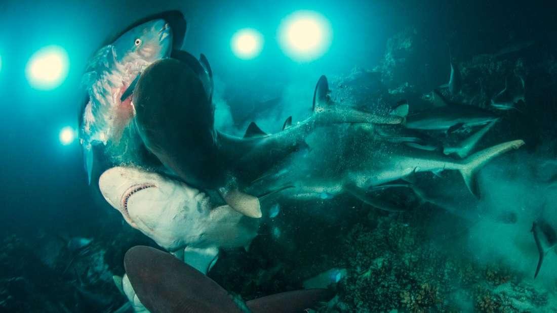Ученые выяснили где туристов чаще всего атакуют акулы
