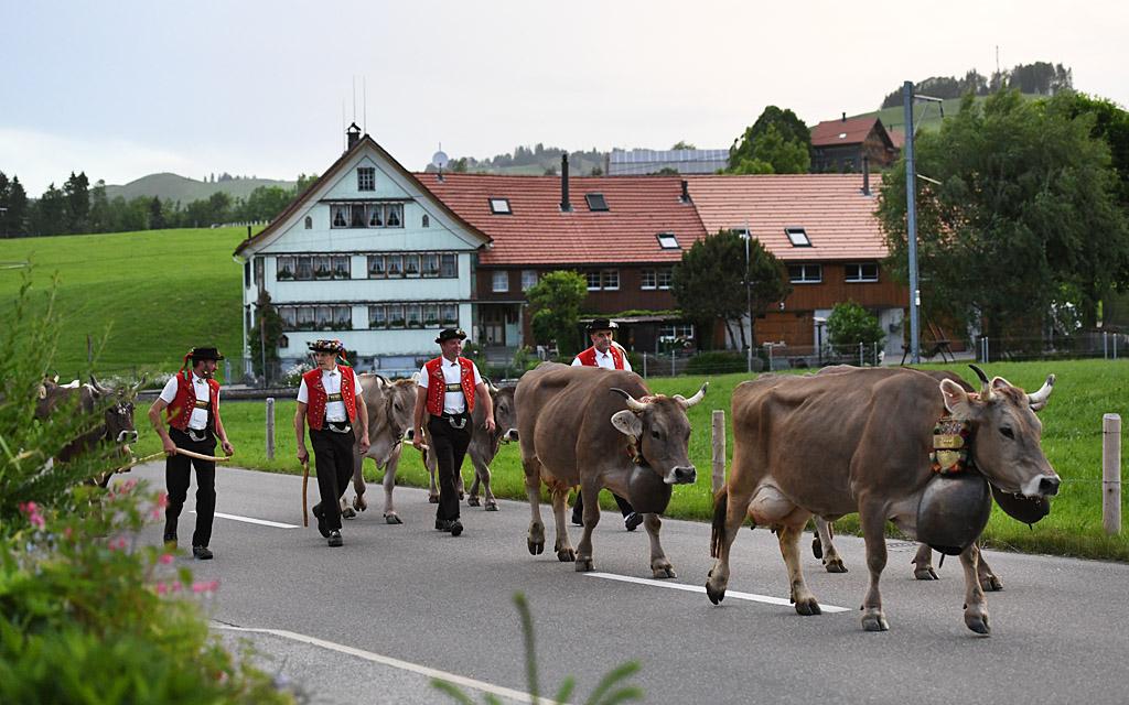От коровьих рогов доШенгена. За что и как голосуют швейцарцы на своих р...