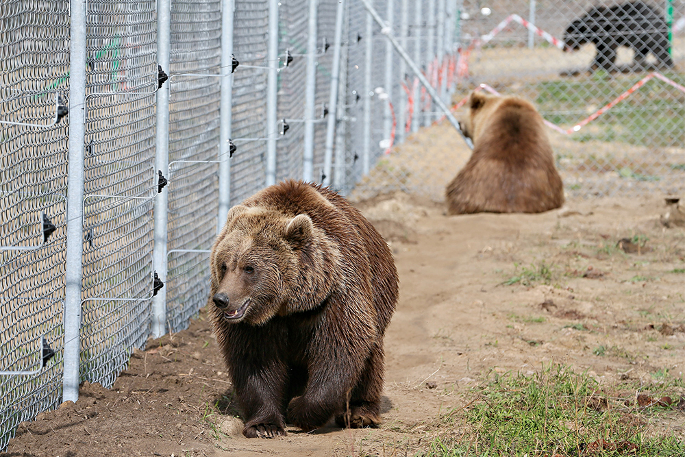 медведь, вольер, забор, фото