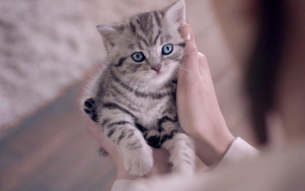 Подчинитесь кошке и вы получите самое верное животное, - Юрий Куклачев