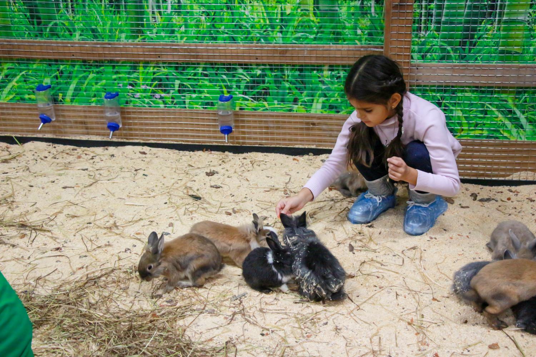Ульяна Супрун хочет запретить контактные зоопарки