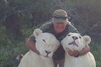 """""""Грубые игры"""": в ЮАР две львицы растерзали своего хозяина, но не стали е..."""