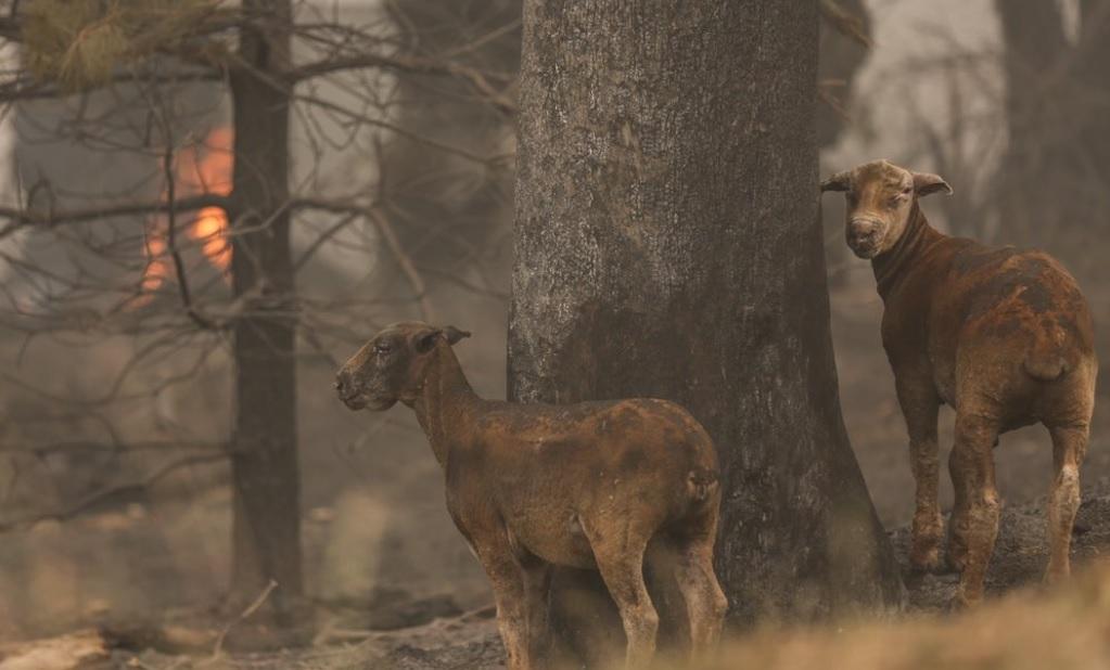 Более миллиарда погибших. В Австралии подсчитали число сгоревших в пожар...