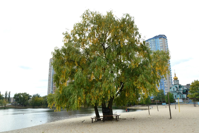 """""""Дерево Цоя"""" и пять других объектов включены в природно-заповедный фонд..."""