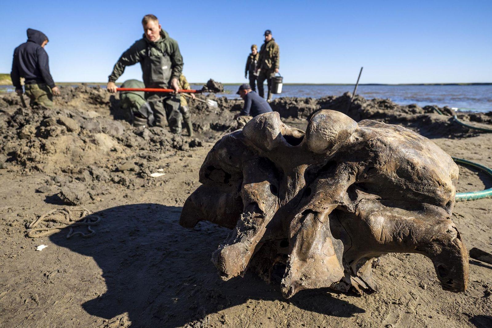 Назвали в честь охотника: в озере на Ямале нашли трехметрового мамонта