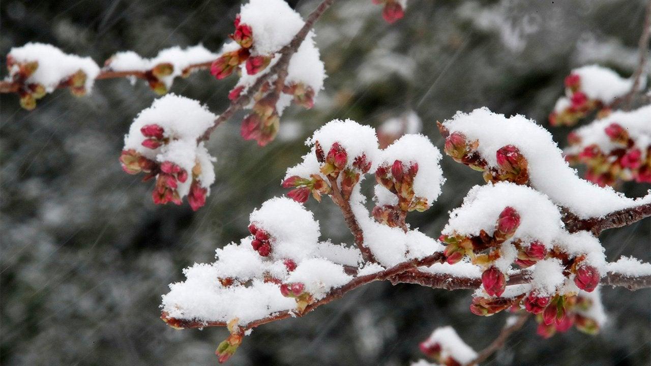 Весна ушла на карантин. В Украине апрель начнется с похолодания и снега