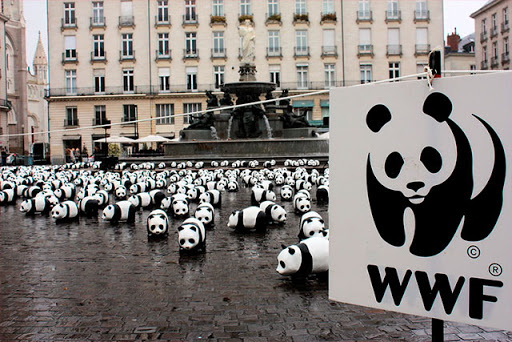 Всему виной человек. Численность диких животных в мире сократились за 50...