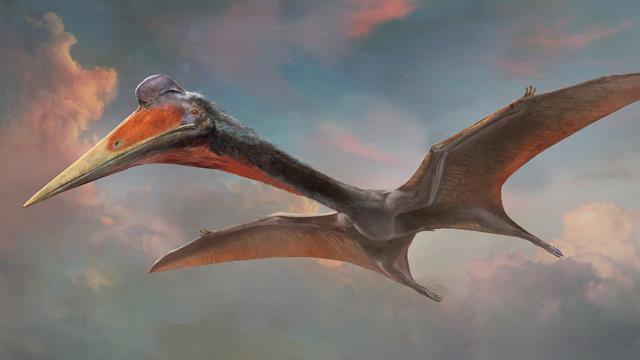 """Почти дракон: ископаемого птеозавра назвали в честь персонажа """"Игры прес..."""