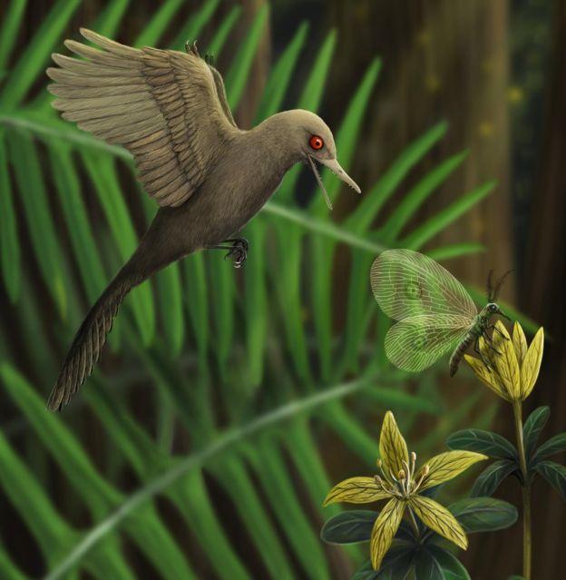динозавр, птица, Oculudentavis khaungraae