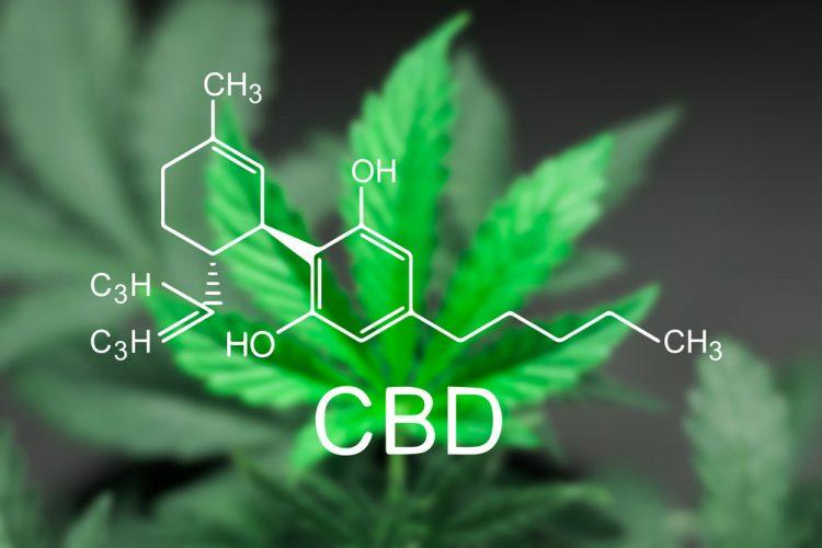 """""""Искусственную марихуану"""" научились делать из ГМО-дрожжей"""