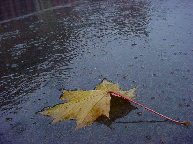 Погода в Украине: синоптики предупреждают о сильных порывах ветра