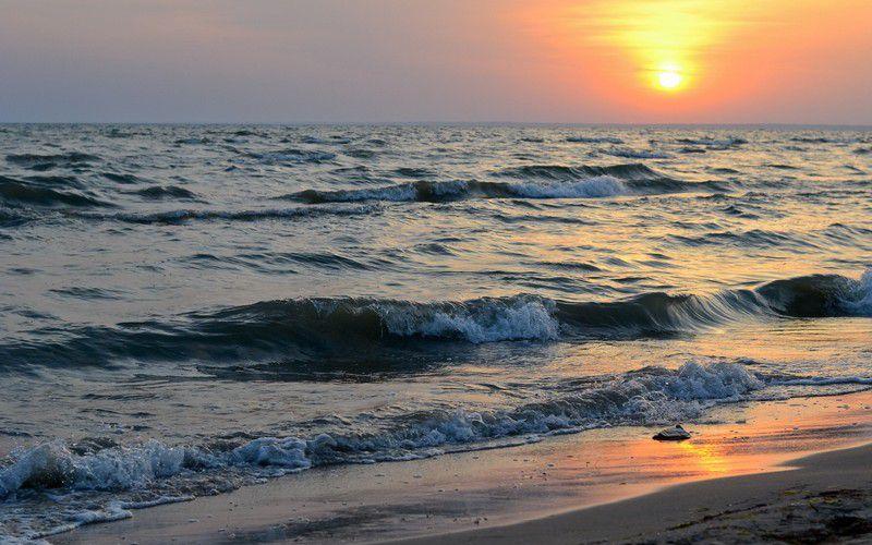 В Азовском море почернела вода из-за водорослей