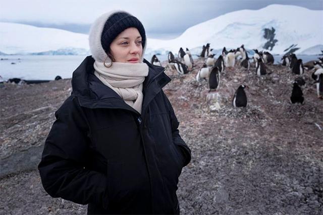 В компании пингвинов. Марион Котийяр показала фото из поездки в Антаркти...