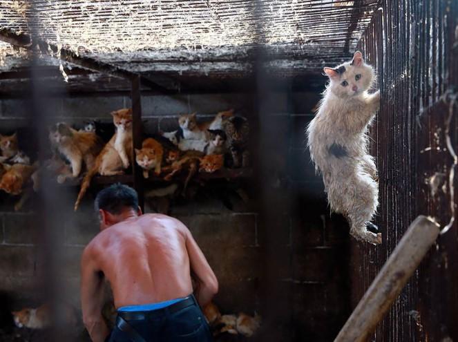 Без котов и собак. Китайцы планируют изменить свой рацион из-за коронави...