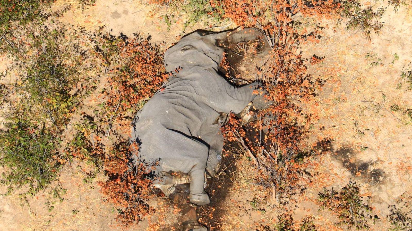 Не менее 350 слонов погибли в Ботсване при загадочных обстоятельствах