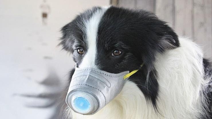 В Гонконге зафиксировали первый случай заражения коронавирусом животного