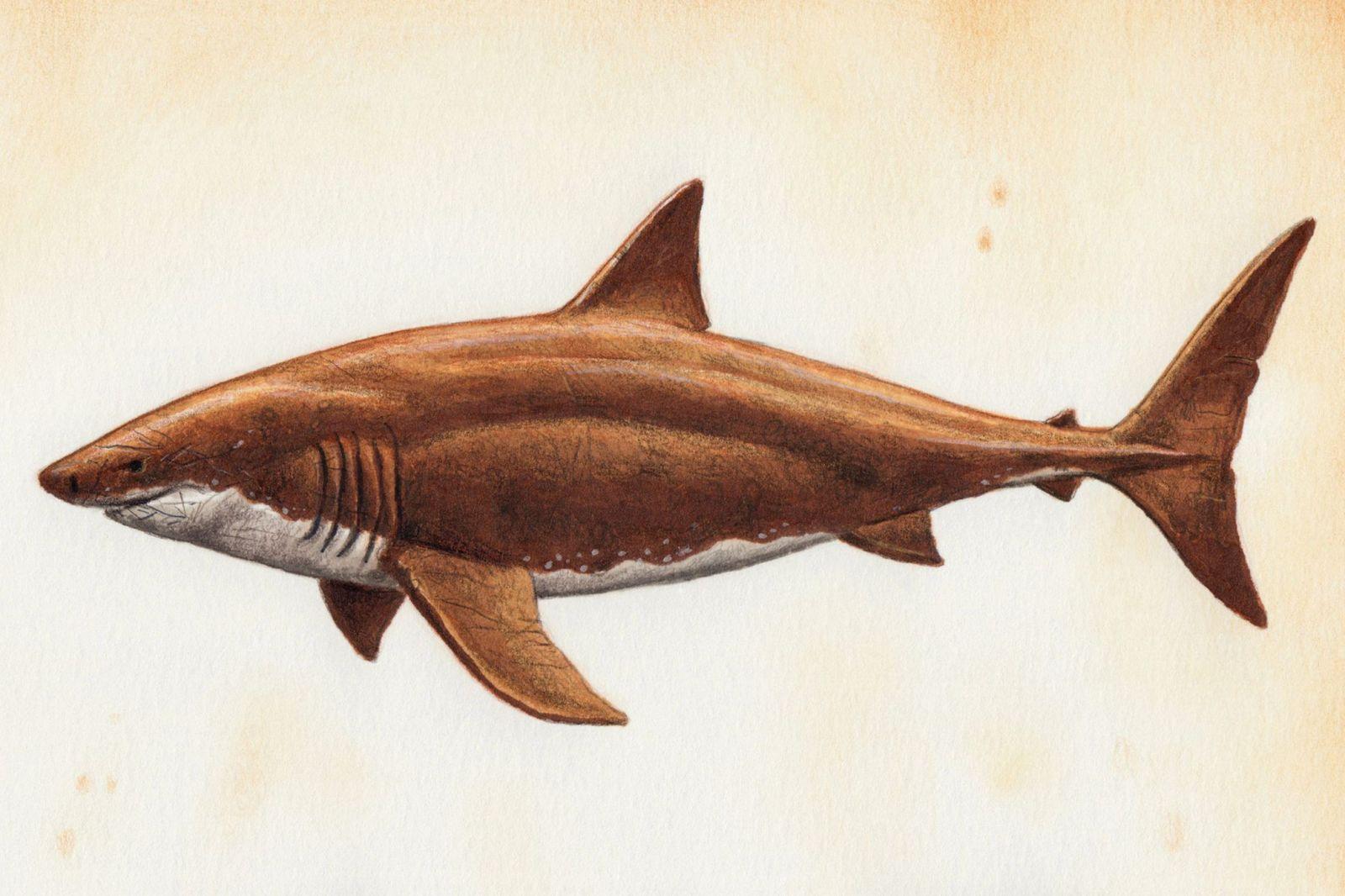 акула, рисунок, древность
