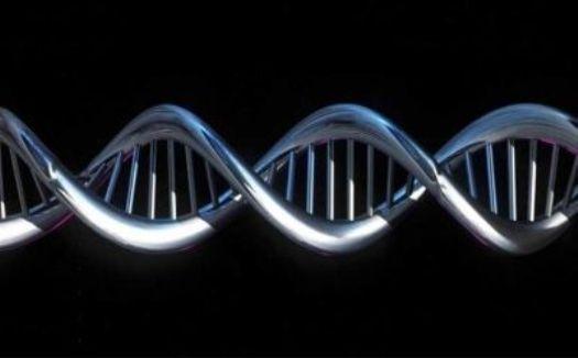 У евреев ашкенази нашли «ген долгожительства»