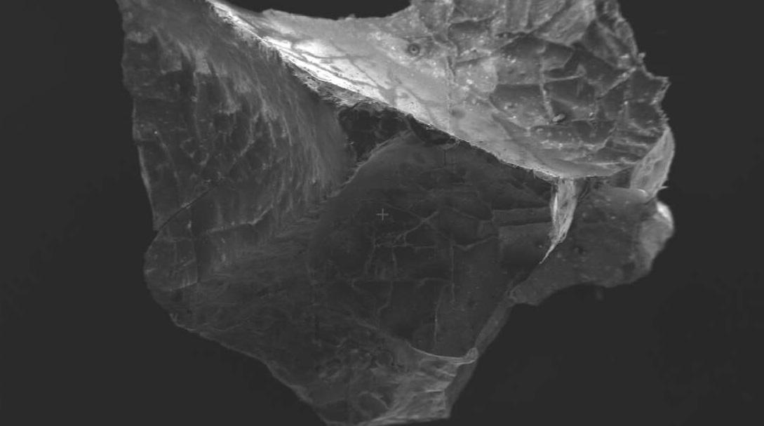 В остекленевшем мозге жертвы Везувия нашли идеально сохранившиеся нейрон...