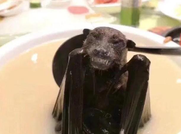 Суп из летучих мышей. Выяснилось, как новый коронавирус передался от жив...