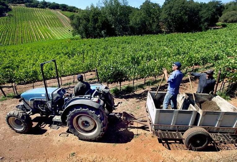 Виноградари и виноделы получат свой профессиональный праздник