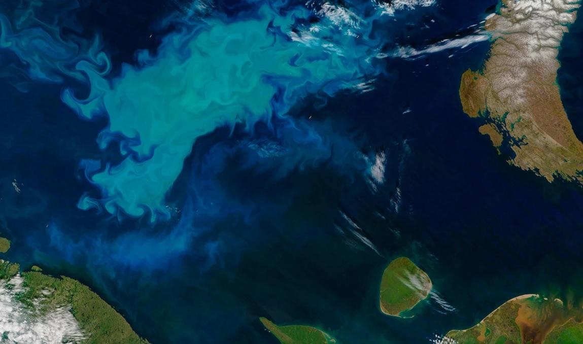 """""""Густой суп из водорослей"""" заставляет Северный Ледовитый океан поглощать..."""