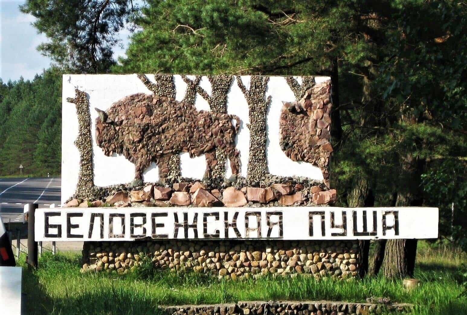 Ученые заглянут в прошлое Беловежских лесов на 400 лет