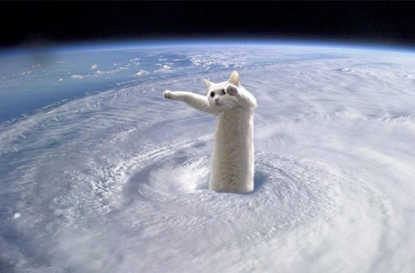 Умер кот-мем Longcat, звезда интернета 2006 года